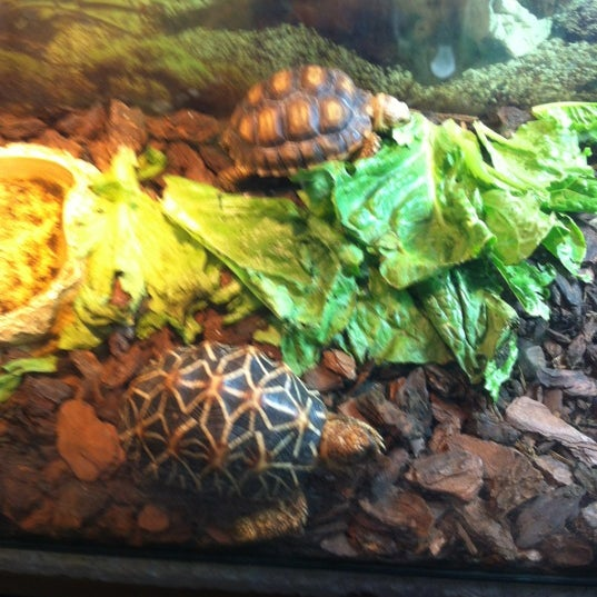 Photos at Westman Reptile Gardens