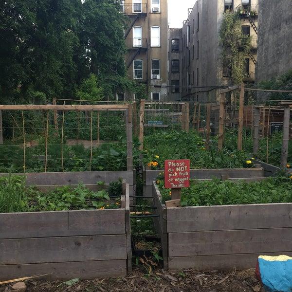 photo taken at 462 halsey community garden by xq on 6172018 - Halsey Garden