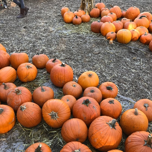 Photo taken at Clancy's Pumpkin Patch by Emily B. on 10/22/2017