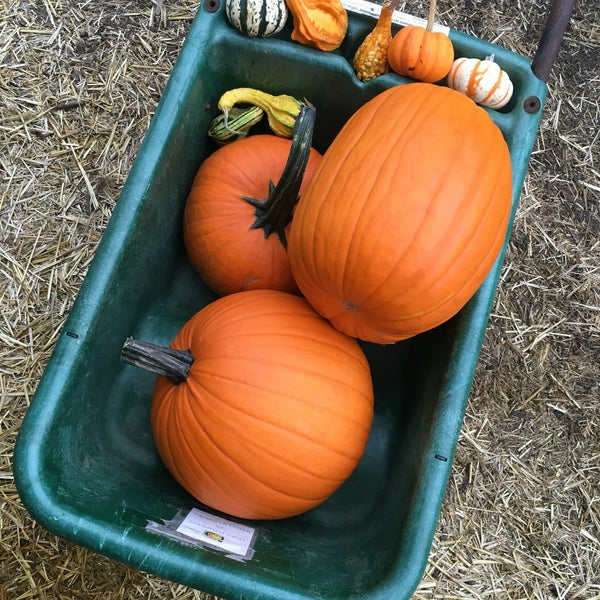 Photo taken at Clancy's Pumpkin Patch by Emily B. on 10/15/2016