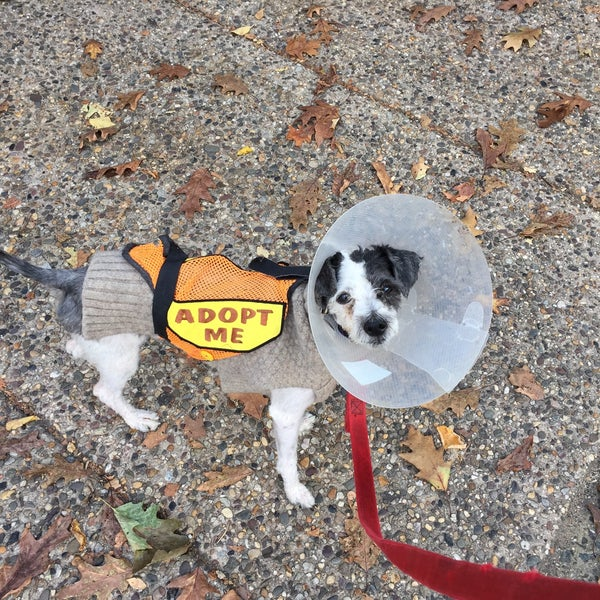 Photo taken at PAWS by Russell E. on 10/13/2015