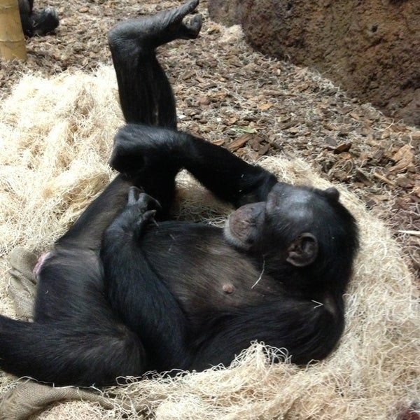 Photo taken at Lincoln Park Zoo by Stephanie G. on 1/13/2013