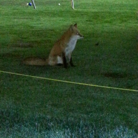Photo taken at Westchester Golf Course by Daniel M. on 12/1/2013
