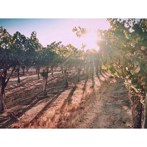 Photo taken at Eberle Winery by Zachary P. on 10/10/2014