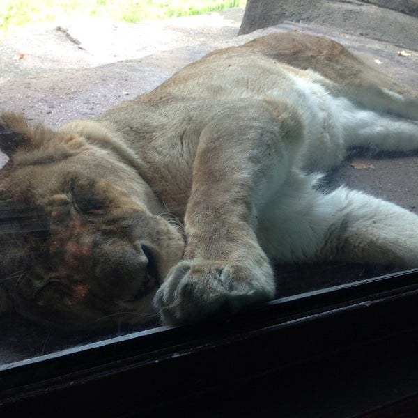 Photo taken at Lincoln Park Zoo by Kristin J. on 7/7/2013