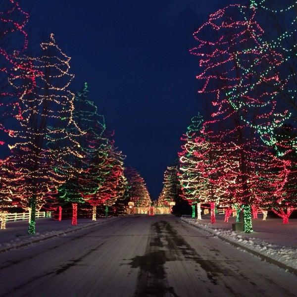 Christmas Trees Denver