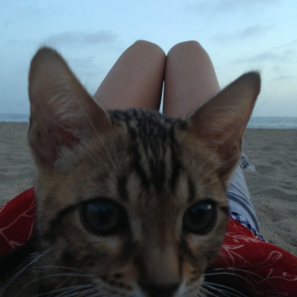 Photo taken at Pacific Palisades Beach by Alexis on 5/21/2013