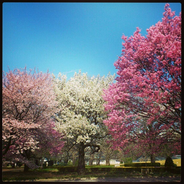 Photo taken at Shinjuku Gyoen by Fumt A. on 3/22/2013