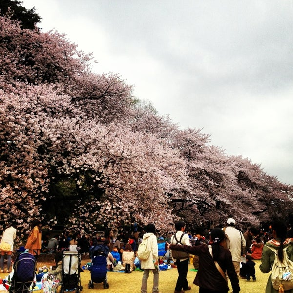 Photo taken at Shinjuku Gyoen by chendo on 3/30/2013