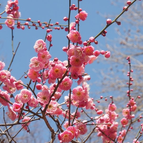 Photo taken at Shinjuku Gyoen by Kei N. on 2/24/2013
