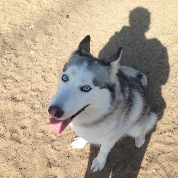 Redondo Beach Dog Friendly