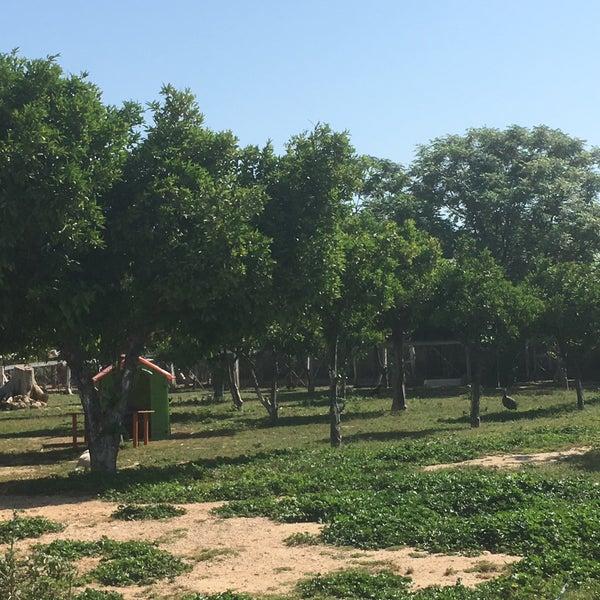 5/1/2018 tarihinde Ahmet Y.ziyaretçi tarafından Nallı Bahçe At Çifliği'de çekilen fotoğraf