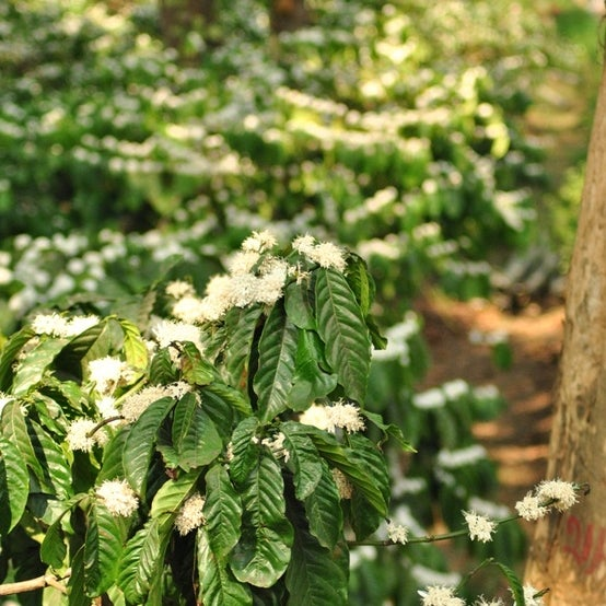 Coorg is the perfect place to begin the gratifying exploration of Coorg's best - coffee, honey and spice!