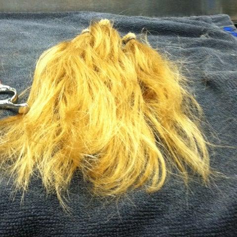 Photos at Capital School Of Hairstyling & Esthetics - Millard ...