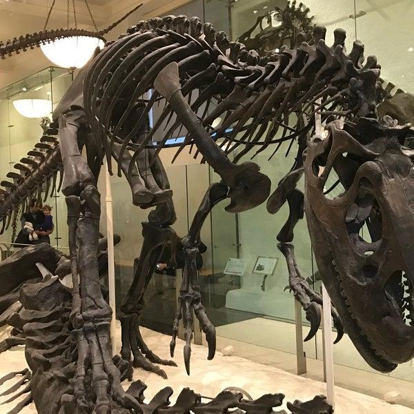 Photo taken at David H. Koch Dinosaur Wing by Jacques on 1/21/2017