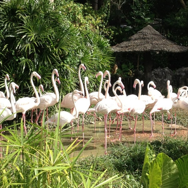 Photo taken at Khao Kheow Open Zoo by Surasak W. on 12/21/2012