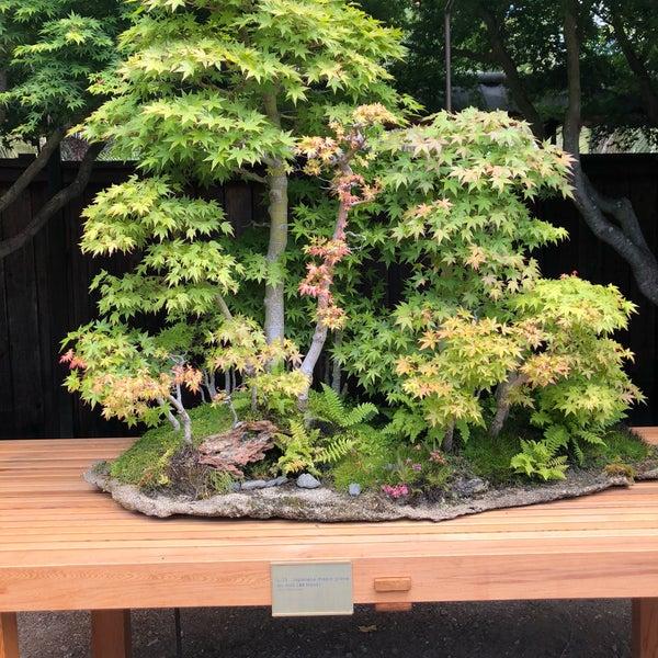 Bonsai Garden At Lake Merritt Adams Point 666 Bellevue Ave