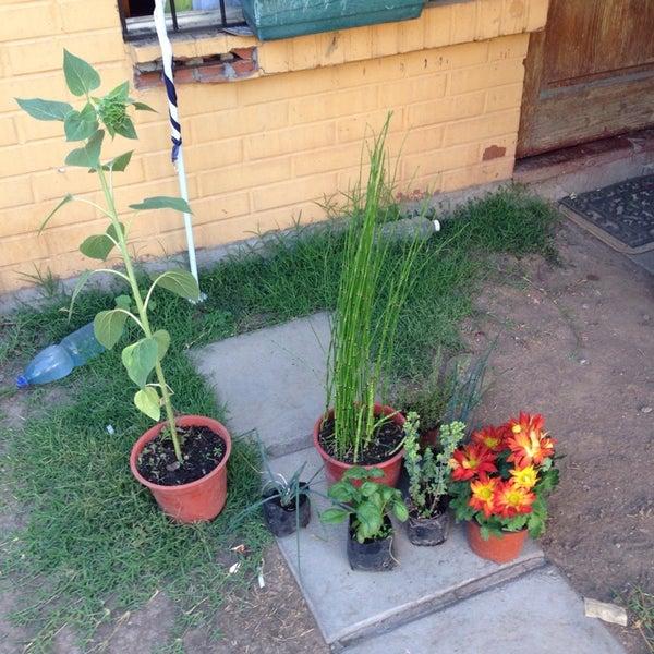 Viveros De Plantas En Renca Of Viveros De Renca Renca 4 Tips De 85 Visitantes