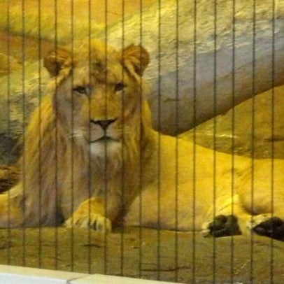 Photo taken at Lincoln Park Zoo by Patrick W. on 1/1/2013