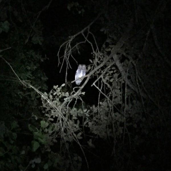 castellow hammock nature center   trail in miami  rh   foursquare