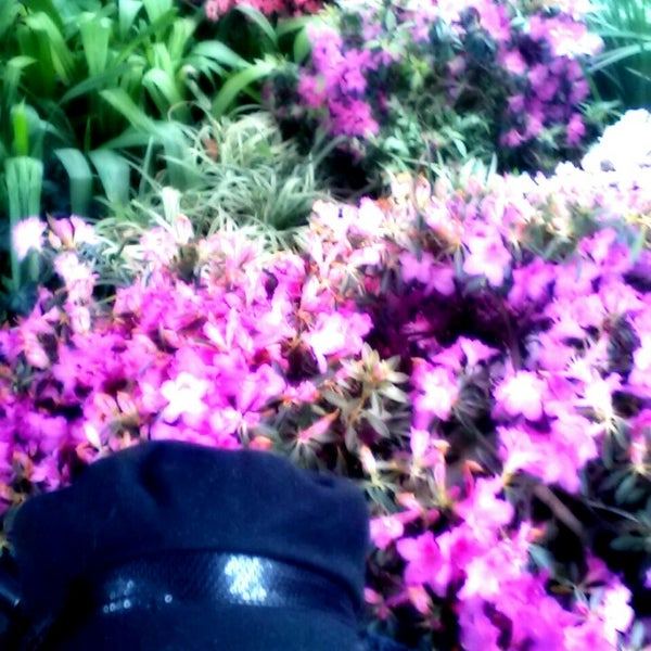 Photo taken at Garfield Park Conservatory by Lady TMarie H. on 2/16/2013