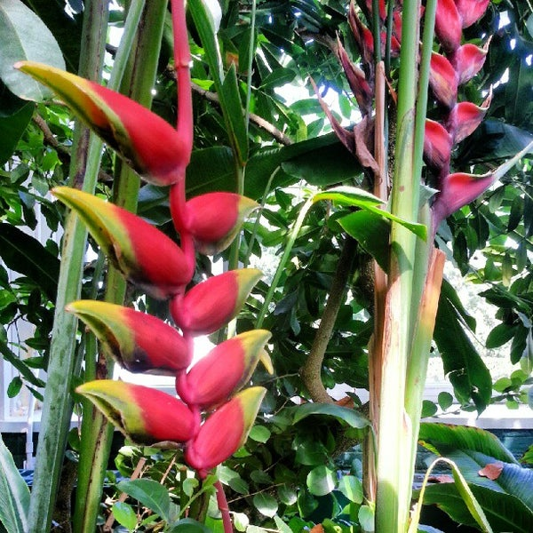 Photo taken at Enid A. Haupt Conservatory by Mr. Woods on 9/14/2012