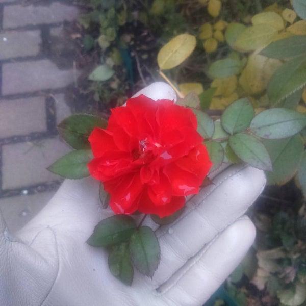 Снимок сделан в КофеМаркет пользователем Юлия Д. 11/10/2016