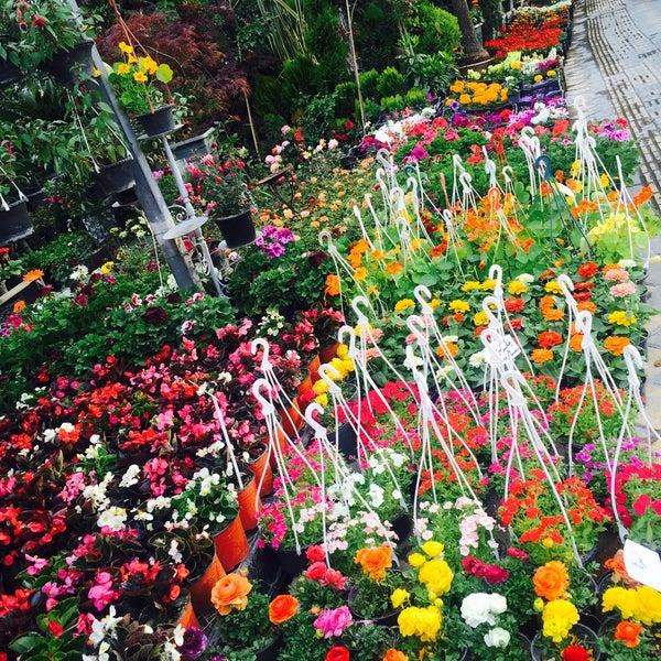 Jahan koudak flower shop da ieki 482016 tarihinde maryam mziyareti tarafndan jahan koudak flower shop mightylinksfo