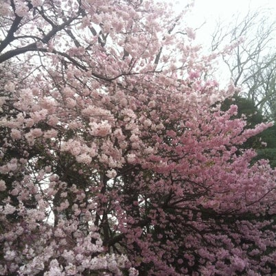Photo taken at Shinjuku Gyoen by K H. on 3/20/2013