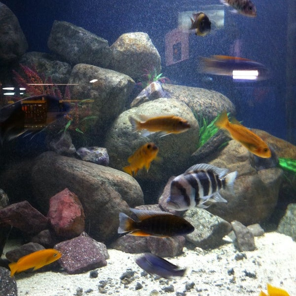 Big Al 39 S Aquarium Services 1900 Innes Road