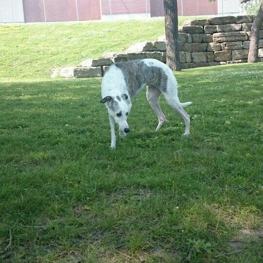 Lemieux Island Dog Park
