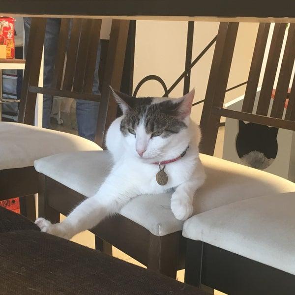 Кафе котов на фонтанке