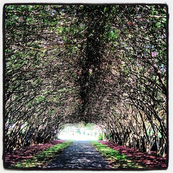Foto tirada no(a) Dallas Arboretum and Botanical Garden por Christine G. em 8/2/2013