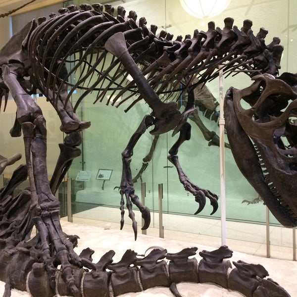 Photo taken at David H. Koch Dinosaur Wing by Claire G. on 11/30/2016