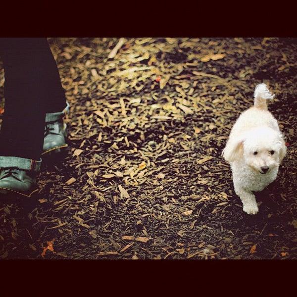 Photo taken at Cunningham Park Dog Run by Jong on 11/3/2012