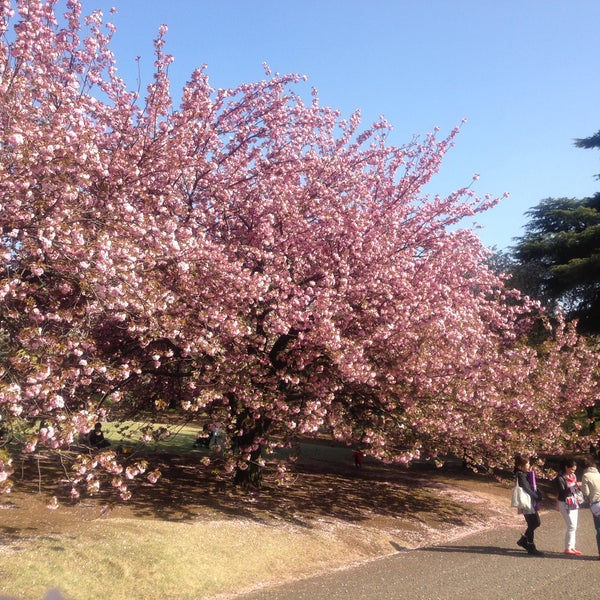 Photo taken at Shinjuku Gyoen by Fumiko O. on 4/13/2013