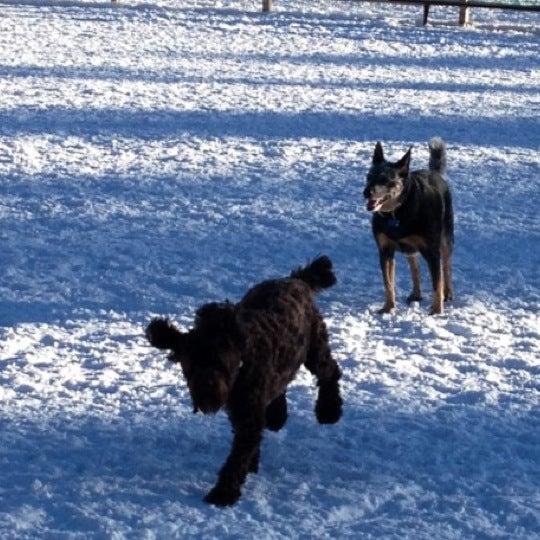 รูปภาพถ่ายที่ Carter Dog Park โดย Melissa R. เมื่อ 12/22/2012
