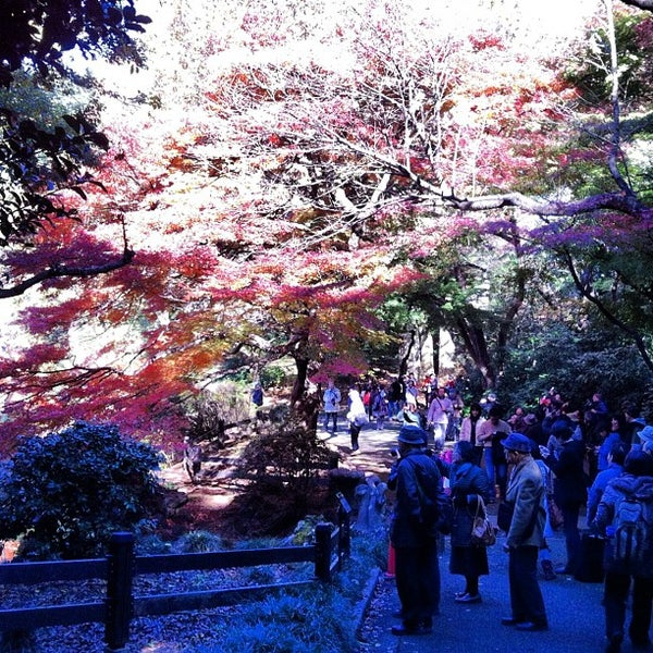 Photo taken at Shinjuku Gyoen by Shuichi M. on 11/25/2012