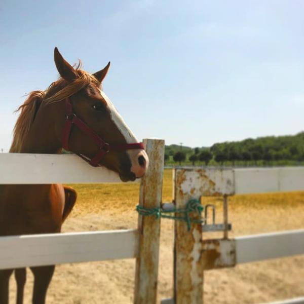 7/9/2018 tarihinde Berna G.ziyaretçi tarafından Olimpos At Çiftliği'de çekilen fotoğraf