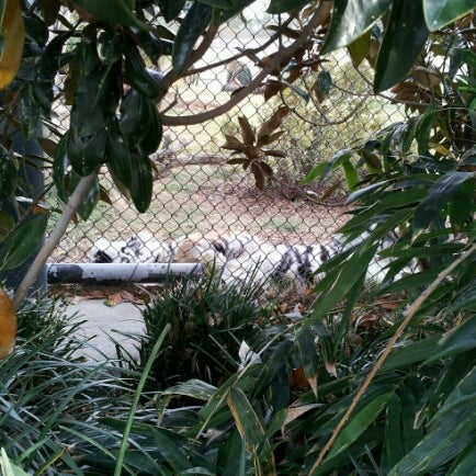 Photo taken at LSU - Mike's Habitat by Stephen A. on 11/13/2012