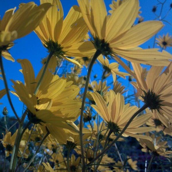 The Botanical Garden Of The Ozarks Fayetteville Ar