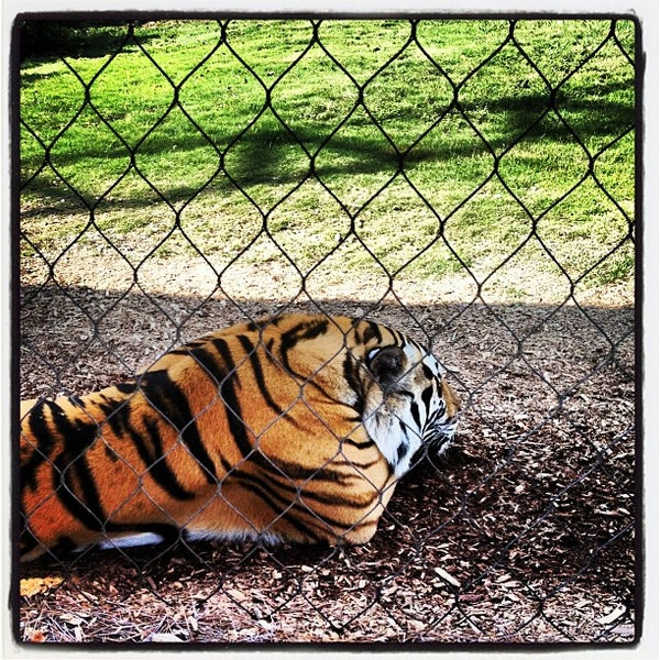 Photo taken at LSU - Mike's Habitat by Matt R. on 9/26/2012