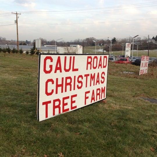 Gaul Road Christmas Tree Farm