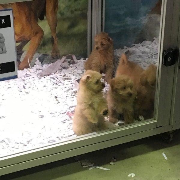 Buy Pet Food Melbourne Cbd