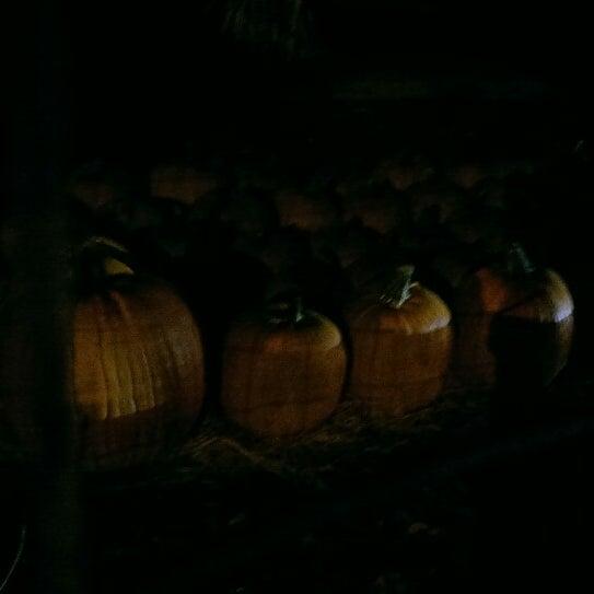 Photo taken at Clancy's Pumpkin Patch by Kajsa S. on 9/30/2014