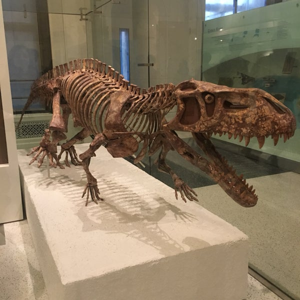 Photo taken at David H. Koch Dinosaur Wing by Angela W. on 10/30/2016