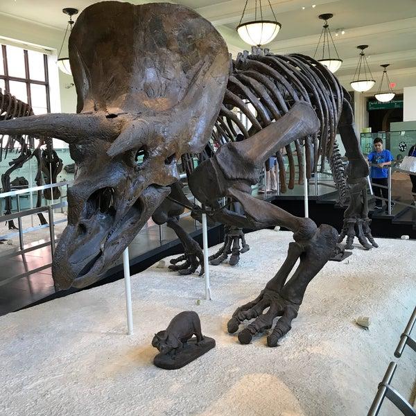Photo taken at David H. Koch Dinosaur Wing by Rafael A. on 5/16/2017