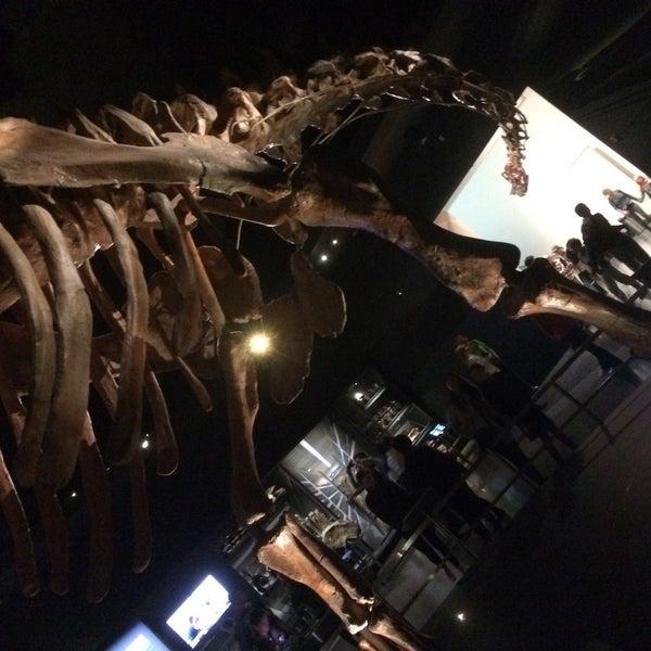 Photo taken at David H. Koch Dinosaur Wing by Lenny K. on 5/22/2017