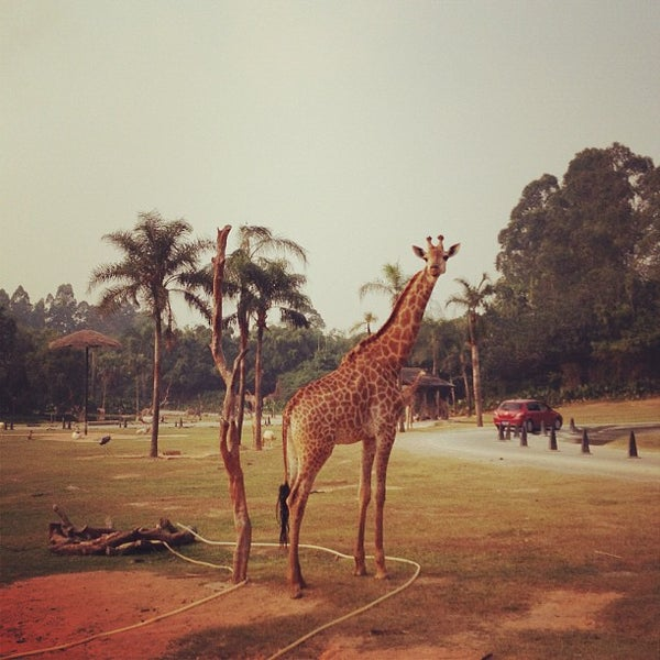 Photo taken at Xiang Jiang Safari Park, Guangzhou by Yoonski K. on 10/7/2012