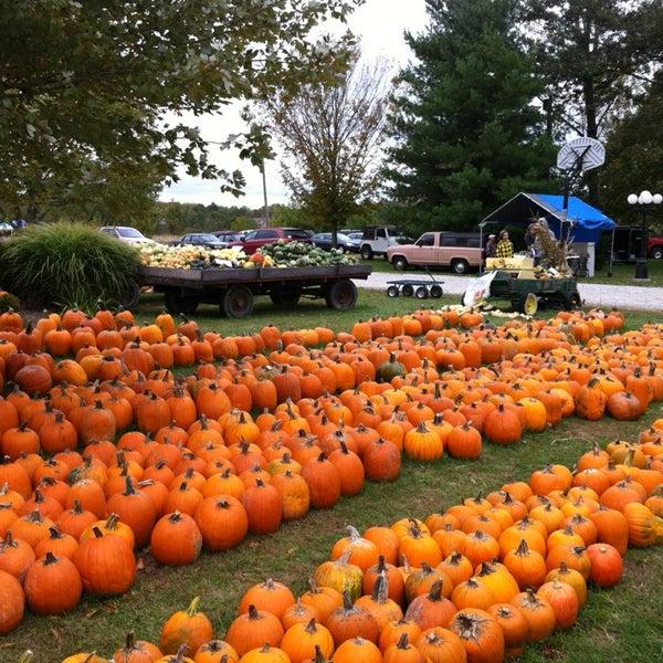 Vogt farm pumpkin patch farm.